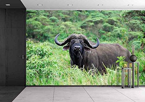 Cape Race Buffalo in Ngorongoro Conservation Area Tanzania