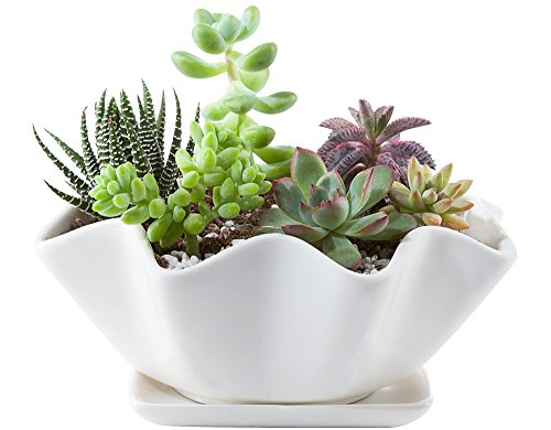 Mkono 6-Inch White Ceramic Succulent Plant Pot with Saucer Modern Cactus Planter Decorative Planting Bowl with Drainage Hole (Cactus Bowl Planter)