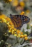 Sunshine & Nectar