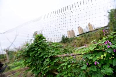 GARDEN BIRD NETTING - 7 X 75 FT Plastic Wire Mesh For Outdoor Raised Bed Plants and Vegetables - Stops Birds, Deer and Other Pests - Perfect For Poultry Fencing or Pond Net - SATISFACTION GUARANTEE