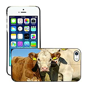 Super Stellar Slim PC Hard Case Cover Skin Armor Shell Protection // M00125780 Ko Calf Cows Gape Together // Apple iPhone 5 5S 5G