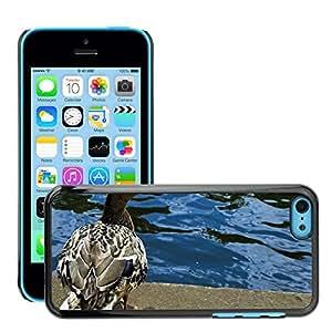 Print Motif Coque de protection Case Cover // M00156780 Pico Animal Pájaro de Brown lindo del // Apple iPhone 5C