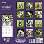 2020 Bulldogs Wall Calendar by Bright Day, 16 Month 12 x 12 Inch, Cute Dogs Puppy Animals English British 11