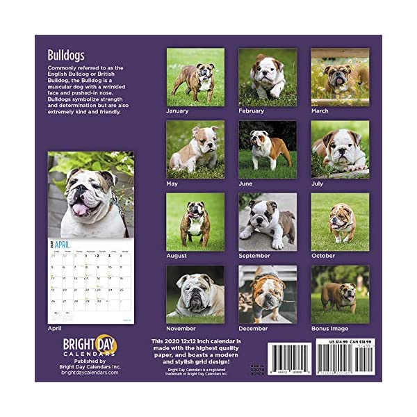 2020 Bulldogs Wall Calendar by Bright Day, 16 Month 12 x 12 Inch, Cute Dogs Puppy Animals English British 2