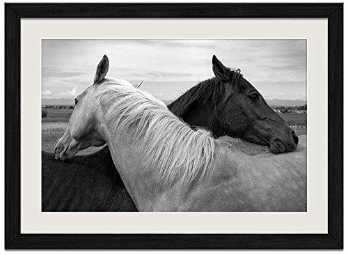 Black and White Horse - E - Art Print Wall Black Wood Grain Framed - Framed Photo Mint
