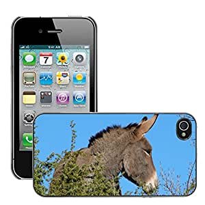 Hot Style Cell Phone PC Hard Case Cover // M00116488 Donkey Animal Equine Head Mammal // Apple iPhone 4 4S 4G