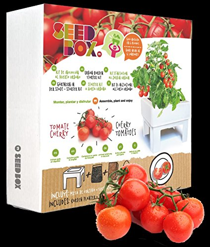 Huerto urbano ecológico tomate cherry (Kit regalo de iniciación al ...