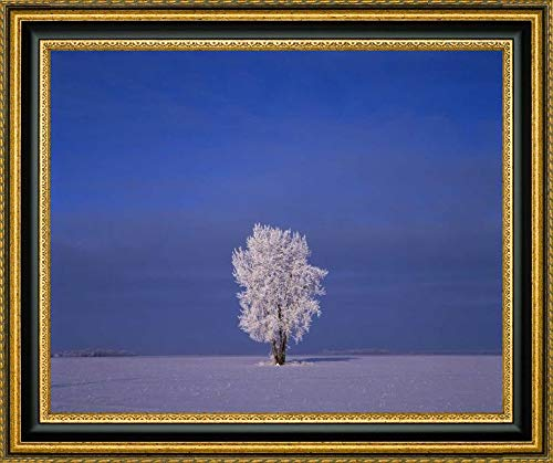 Canada, Dugald, Hoarfrost on Cottonwood Trees - 2 by Mike Grandmaison - 26.25