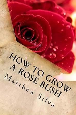 how to grow a rose bush