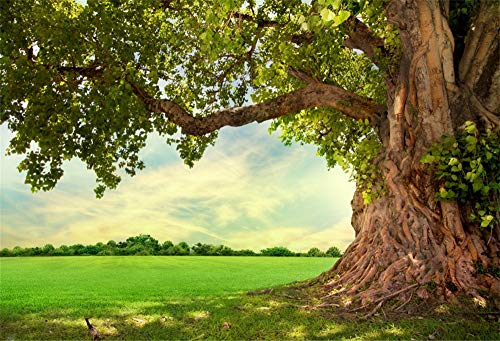 CSFOTO 7x5ft Spring Scenery Backdrop Outdoor Natural Landscape Old Tree Lush Leaves Branches Grass Photography Background Wedding Vacation Afternoon Leisure Time Photo Shoot Wallpaper