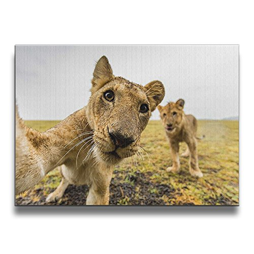 Office Gallery Borderless Frame Pictures Cute Lion 1620 Inch Solid Wood (Photo Booth Strip Costume)