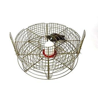 Jaula captura palomas 8 departamentos: Amazon.es: Industria ...