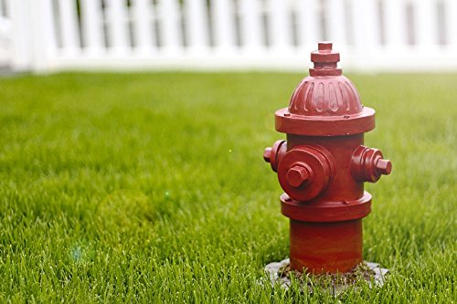 Home Comforts LAMINATED POSTER Grass Hydrant Pee Fire Hydrant Outdoors Dog Red ()