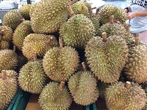 FREEZE DRIED DURIAN 1000g THAI FRUIT SNACK FRUIT FOOD NATURAL CRISPY by Sunbizpro (Image #5)