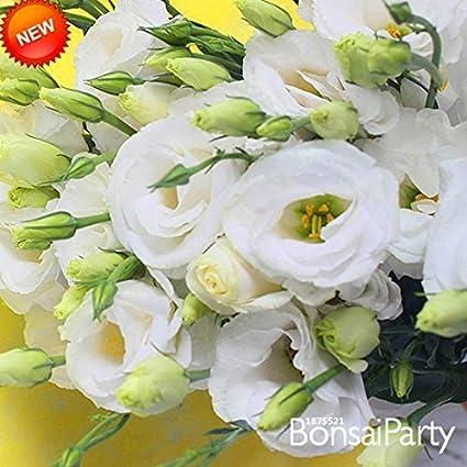 Amazon big salewhite eustoma seeds perennial flowering plants big salewhite eustoma seeds perennial flowering plants balcony potted flowers seeds lisianthus100 mightylinksfo