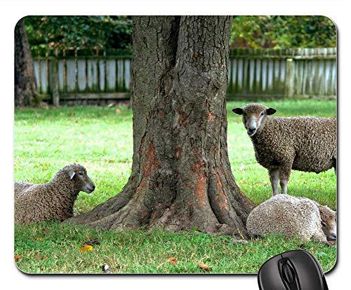 (Mouse Pads - Sheep Ewe Livestock Mammals Flock Sitting Tree)
