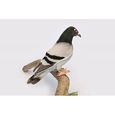 "Pack of 3 Life-like Handcrafted Extra Soft Plush Pigeon Stuffed Animals 11.5"": Home & Kitchen"