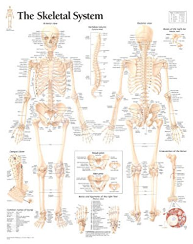 wall anatomy chart - 8