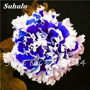 100 PC mezcladas Semillas de color flor de la petunia Petunia exóticas Semillas Bonsai pétalos de la flor de la petunia petunia del jardín semillas para jardín 19