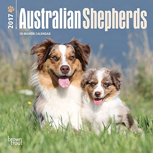 "Australian Shepherds 2017 Mini Calendar 7"" x 7"""