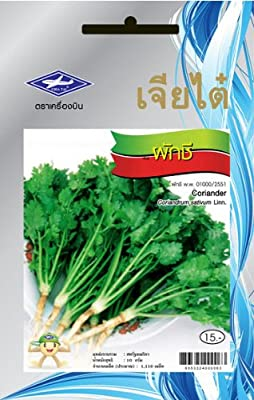 Coriander (1100 Seeds) Seeds - 1 Package From Chai Tai, Thailand