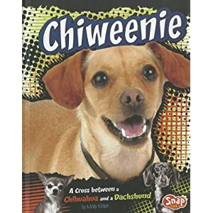 Chiweenie: A Cross Between a Chihuahua and a Dachshund (Designer Dogs)