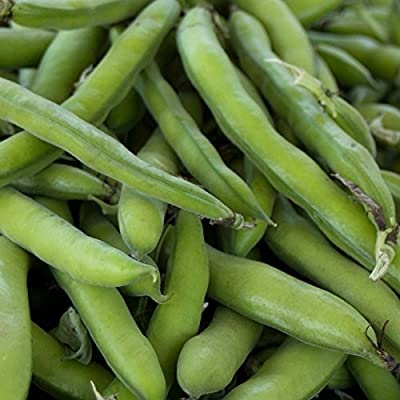 Roma II Bush Bean Seeds - Non-GMO, Heirloom Green Snap Roma 2 Bean Seeds - Vegetable Garden Seeds