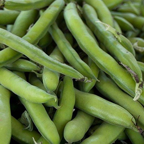 - Roma II Bush Bean Seeds - 1 Lb - Non-GMO, Heirloom Green Snap Roma 2 Bean Seeds - Vegetable Garden Seeds