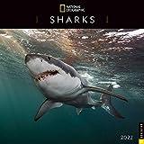 National Geographic: Sharks 2022 Wall Calendar