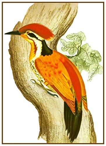Orenco Originals Golden Woodpecker Naturalist Gould Birds Counted Cross Stitch Pattern