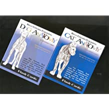 Dog and Cat Anatomy Flashcards SET OF TWO