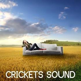 Download crickets sound