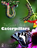 The Secret Life of Caterpillars, Densey Clyne, 1921073616