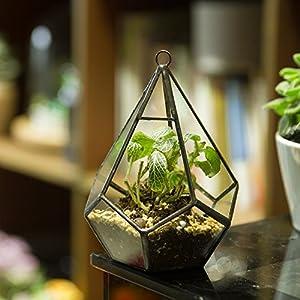 NCYP 5.3 inches Hanging Glass Terrarium Modern Artistic Wall Tears Shape Diamond Geometric Polyhedron Air Plant Holder Desk Planter DIY Centerpiece Vase Succulent Flower Pot (Plants not Included) 3