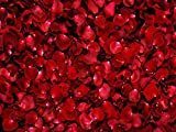 DZJYQ 6.5x5ft(2x1.5m) Red Shining Rose Petal Romantic Love Beautiful Girl Sister Daughter Wedding Backdrop Studio Photography Background 48