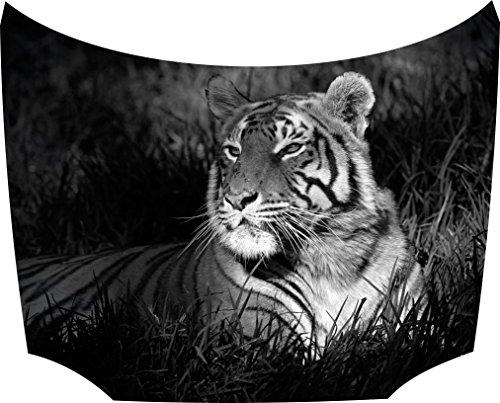 Bonnet Sticker Tiger Brown: