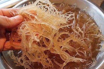 caribbeangardenseed Natur, Meer Moos (ROH) 4oz–Irish Moos, Chondrus Crispus, Jamaika Drink Unten Unbranded