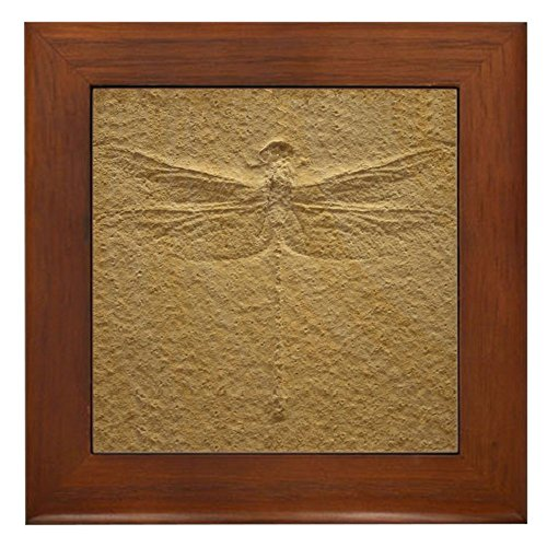 CafePress Dragonfly Fossil Decorative Hanging