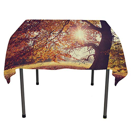Scenery Decor, Waterproof Tablecloths Beech Tree in Foliage with Sun Rays and Extending Long Branches Idyllic Art, for Kitchen Dining Party, 70x70 Inch Orange Brown