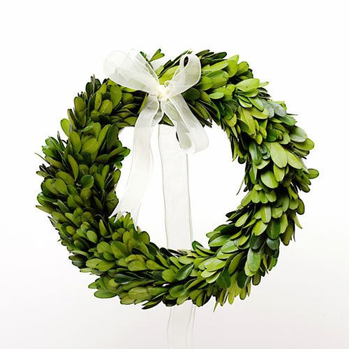 Phantomx Preserved Boxwood Round Wreath - 8 Inch Christmas Trees Decorated With Mesh Ribbon