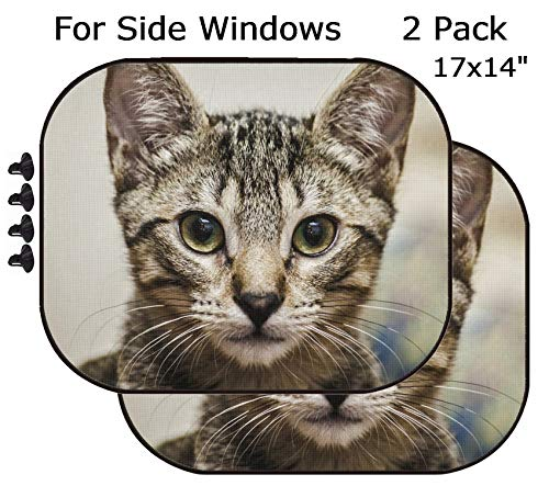 (MSD Car Sun Shade - Side Window Sunshade Universal Fit 2 Pack - Block Sun Glare, UV and Heat for Baby and Pet - Image 20299878 Male Tabby Kitten Portrait)
