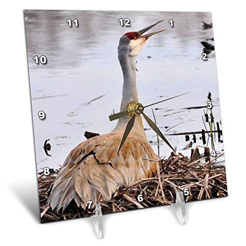 3dRose Dreamscapes by Leslie - Birds - Sandhill Crane Calling its Mate - 6x6 Desk Clock (dc_292243_1)