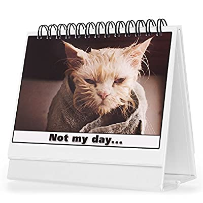 Office Gift For Cat Lovers - Moodycards! Make Everyone Laugh with These Adorable and Hilarious Cats - Let The Kittys Tell Everyone How You Feel! A Terrific Office Gift! 25 Different Moods