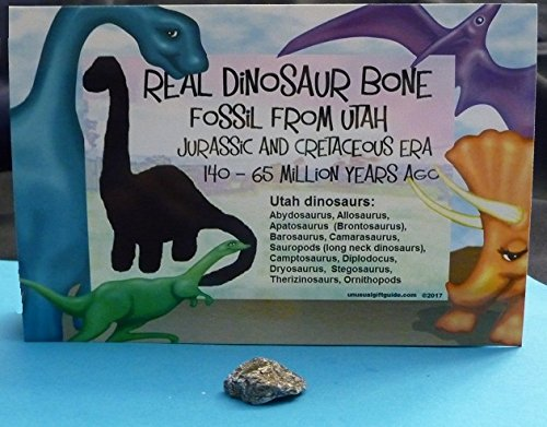 Real Dinosaur bone! Fossil from Utah - Jurassic and Cretaceous eras - Gift, Valentine, birthday, any occasion, for your dinosaur collection, Great businesses give to - Fossil Store Utah