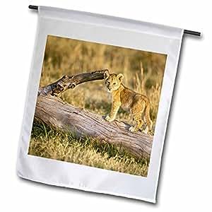 Danita Delimont - Lions - Lion cub on log, Panthera leo, Masai Mara, Kenya-AF21 AJE0185 - Adam Jones - 18 x 27 inch Garden Flag (fl_73036_2)