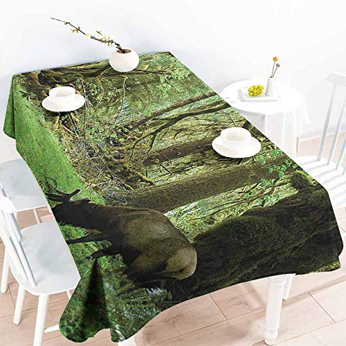 familytaste Rainforest,Rectangle Oblong Table Roosevelt Elk in Rainforest Wildlife National Park Washington Antlers Theme 60