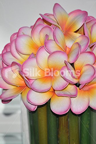 Magenta-Tipped-Frangipani-Green-Stems-Round-Floral-Arrangement