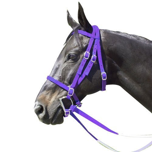 Intrepid International Nylon Race Horse Bridle,