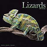 Lizard Calendar - Cute Animal Calendar - Calendars 2019 - 2020 Wall Calendars - Animal Calendar - Lizards 16 Month Wall Calendar by Avonside
