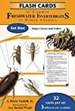 north america cards - Flash Cards of Common Freshwater Invertebrates of North America Set One - Major Classes and Orders